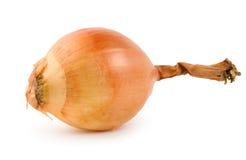 La cipolla ha isolato Immagini Stock