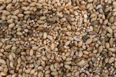 La cipolla organica si è riunita all'azienda agricola ecologica, fondo Fotografia Stock Libera da Diritti