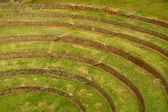 La circulaire d'Inca a fait un pas les terrasses agricoles du Moray, site archéologique dans la région de Cusco, Pérou photos libres de droits