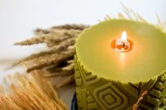 La cire verte a flairé la tige de bougie et de riz, fleur d'or d'herbe Photographie stock