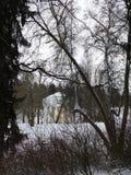 La città del parco della città di Pavlovsk fotografia stock