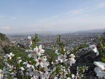 La città di Oš Vista dal supporto Sulaiman-Too Immagine Stock