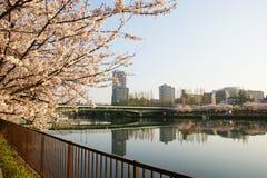 La città di Osaka Fotografia Stock