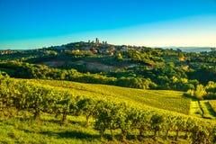 La città medievale panoramica di San Gimignano si eleva orizzonte e vineyar Fotografia Stock