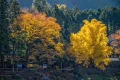 La ciudad de Mitake y el río de Tama en otoño sazonan Foto de archivo