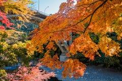 La ciudad de Mitake y el río de Tama en otoño sazonan Fotos de archivo