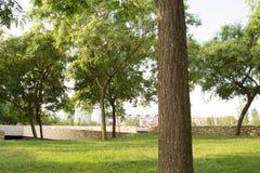 La ciudad se oculta detrás del jardín urbano imágenes de archivo libres de regalías