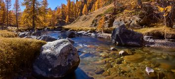 La Clarée river in full Fall colors panoramic. Haute Vallée de la Clarée, Névache, Hautes-Alpes, Alps, Fran. La Claree river with larch trees in stock photography