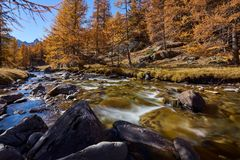 La Clarée river with larch trees in full Fall colors. Névache, Hautes-Alpes, Alps, France. La Clarée river with larch trees in full Fall colors stock images