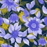 La clemátide púrpura y amarilla transparente florece en las ramitas que suben contra fondo oscuro Modelo floral inconsútil stock de ilustración