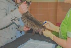 La clinica del gatto è stata fatta un'iniezione fotografie stock
