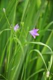 La cloche de forêt de fleur Images libres de droits