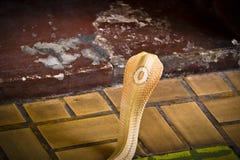 La cobra separó la capilla fotografía de archivo