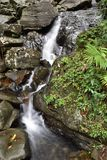 Detail of waterfall in rain forest  Royalty Free Stock Images