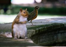 La coexistencia con otras criaturas es posible fotografía de archivo