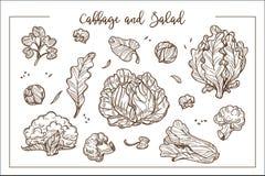 La col y la ensalada en manojos o cabezas y separan las hojas libre illustration