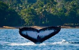 La cola de la ballena jorobada madagascar Isla del ` s de St Mary imágenes de archivo libres de regalías