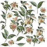 La colección de alta mano detallada del vector dibujada florece para el diseño Foto de archivo libre de regalías