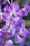 La colección de flor de la orquídea en la tierra de la parte posterior del verde, cierre encima de la orquídea florece Foto de archivo