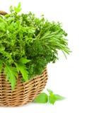La colección de hierbas picantes frescas en cesta/aisló/vertical Imagen de archivo libre de regalías