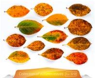La colección de hojas vivas del marrón amarillo Sistema de hojas de otoño en un fondo blanco Plantas en blanco aislado Imagen de archivo libre de regalías