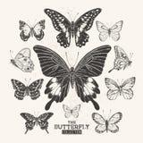 La colección de la mariposa Fotografía de archivo