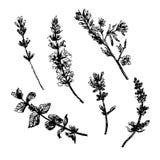 La colección determinada de dibujo de flores salvajes bosqueja el ejemplo dibujado mano ilustración del vector