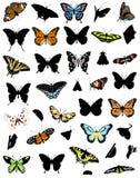 La colección grande de mariposas Imagen de archivo