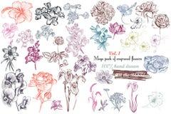 La colección mega de alto vector detallado florece para el diseño Imagenes de archivo