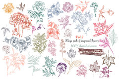La colección mega de alto vector detallado florece para el diseño Imágenes de archivo libres de regalías