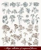 La colección mega de alto vector detallado florece para el diseño Fotografía de archivo