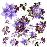 La colección o el sistema del campo de vector realista florece para el diseño Imagen de archivo