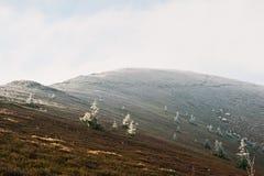 La colina con muchos hiela el árbol y la luz del sol de los Años Nuevos, cárpatos, Foto de archivo libre de regalías