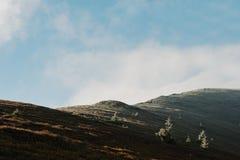 La colina con muchos hiela el árbol y la luz del sol de los Años Nuevos, cárpatos, Fotografía de archivo libre de regalías