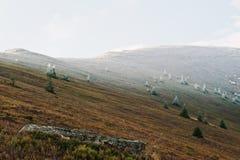 La colina con muchos hiela el árbol y la luz del sol de los Años Nuevos, cárpatos, Foto de archivo