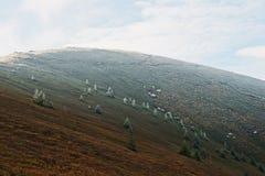 La colina con muchos hiela el árbol y la luz del sol de los Años Nuevos, cárpatos, Fotografía de archivo