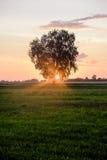 La colina de cruces, Lituania, Europa Imágenes de archivo libres de regalías