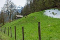 La colina de la nieve en hallstatt tiene árbol en día cloundy Fotografía de archivo libre de regalías
