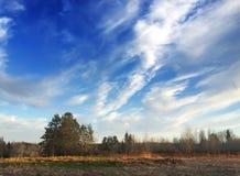 La colina del pino en un fondo del cielo azul y una primavera colocan con la hierba de un año pasado Imagenes de archivo