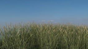 La colina herbosa con el fondo del cielo azul, 3D realista rinde Fotos de archivo