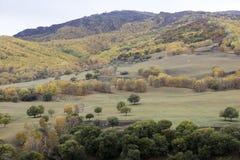La colina llegó a ser colorida en otoño Foto de archivo libre de regalías