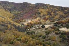 La colina llegó a ser colorida en otoño Fotografía de archivo libre de regalías