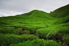 La colina verde Foto de archivo