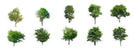 La collection d'arbres a isolé des arbres illustration libre de droits