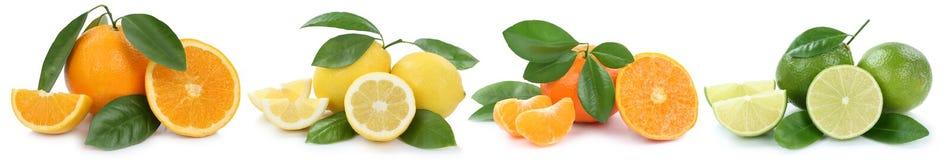 La collection de citrons d'oranges porte des fruits dans une rangée sur le blanc Images libres de droits