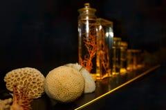 La collection de coraux Photographie stock libre de droits