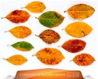 La collection de vert vivant de brun jaune part aux points des vers Ensemble de feuilles d'automne sur un fond blanc Photographie stock