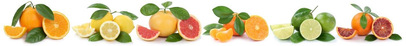 La collection du pamplemousse de citrons d'oranges porte des fruits dans une rangée d'isolement Photo libre de droits
