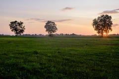 La collina degli incroci, Lituania, Europa Immagine Stock