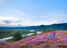La collina e la famiglia del fiore dell'erica di estate sulla collina superano immagini stock